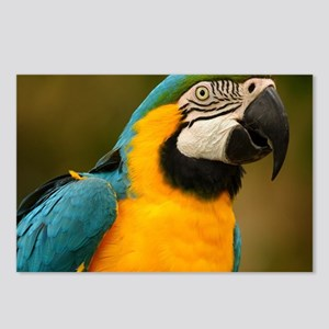blue and gold macaw Postcards (Package of 8)