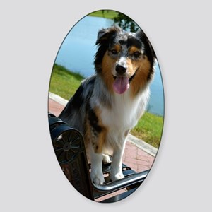 Blue Merle Aussie Sticker (Oval)