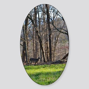 Deer in Cades Cove Sticker (Oval)