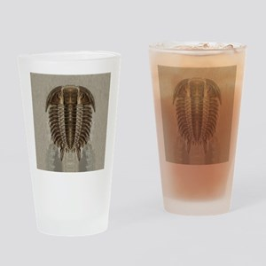 Trilobite Fossil Drinking Glass