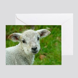 Sheep 001 Greeting Card