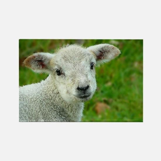 Sheep 001 Rectangle Magnet