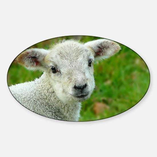 Sheep 001 Sticker (Oval)