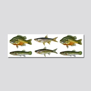 Freshwater Fish Car Magnet 10 x 3