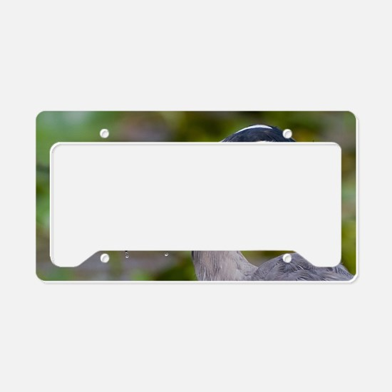 Blue Catfish License Plate Holder