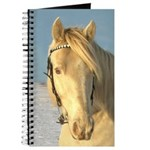 Journal, Classic Cream Champagne TWH Stallion