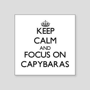 Keep calm and focus on Capybaras Sticker