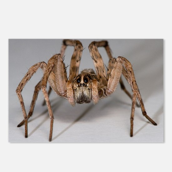 Wolf Spider Postcards (Package of 8)