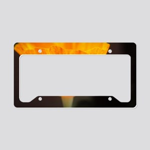 Radiance License Plate Holder