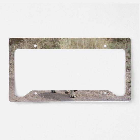 Hyena License Plate Holder