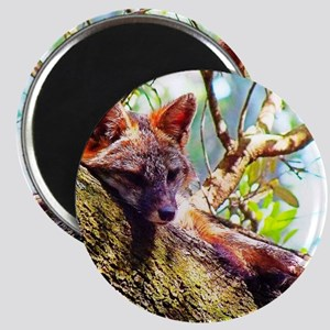 Fox Close Up Magnet