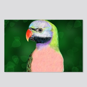 Moustached Parakeet Postcards (Package of 8)