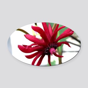 Red Macro Flower Oval Car Magnet