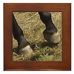 Equine Theme Custom Framed Tile #7139