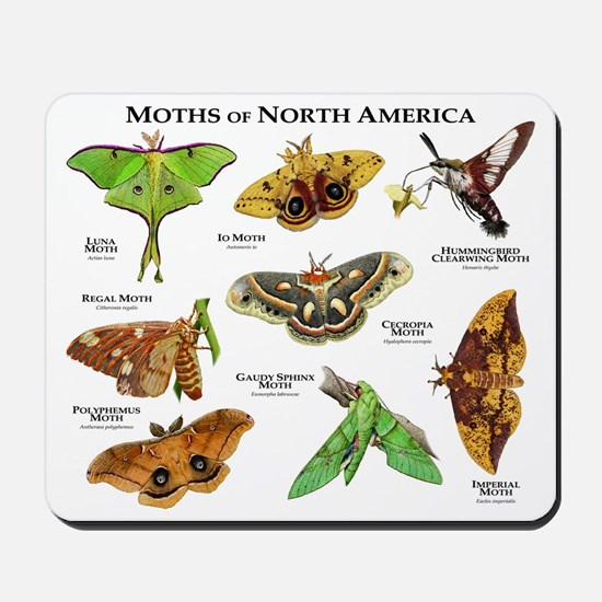 Moths of North America Mousepad