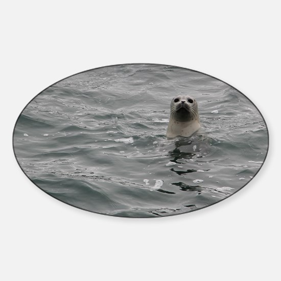 Harbor Seal Sticker (Oval)