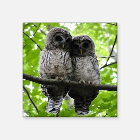 "Cuddling Owls Square Sticker 3"" x 3"""