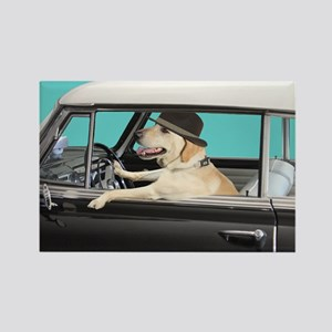 Yellow Labrador Driving Classic C Rectangle Magnet