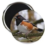 Spotted Towhee Magnet