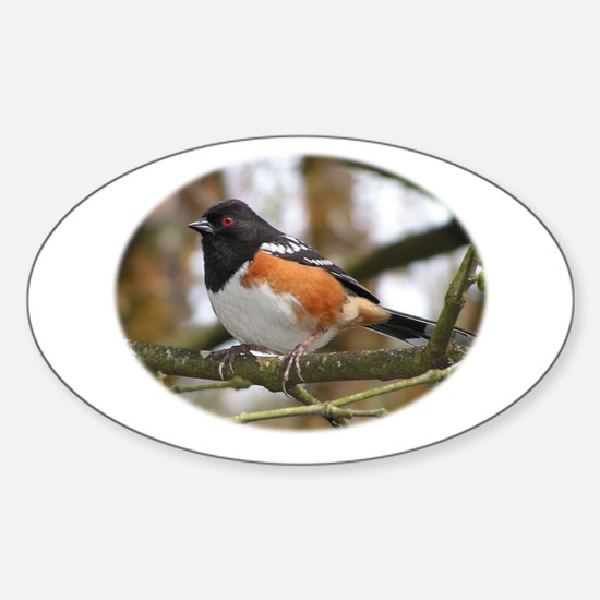 Spotted Towhee Oval Decal