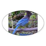 Steller's Jay Oval Sticker