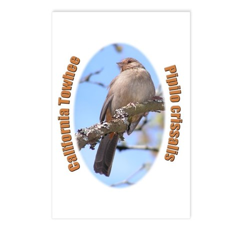 California Towhee Postcards (Package of 8)