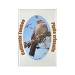 California Towhee Rectangle Magnet (100 pack)