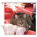 valentine cat Shower Curtain