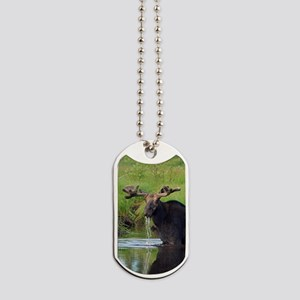 557_h_f nook Dog Tags