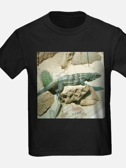 spiny-tailed iguana T