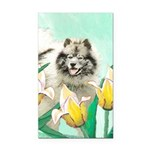 Keeshond in Tulips Rectangle Car Magnet