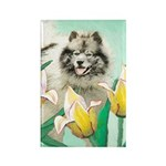 Keeshond in Tulips Rectangle Magnet (100 pack)