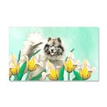 Keeshond in Tulips Car Magnet 20 x 12