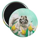 Keeshond in Tulips 2.25