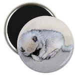 Keeshond Puppy (Sleeping) Magnet