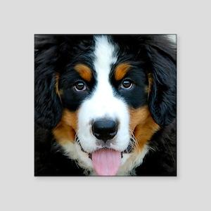 "Bernese Mountain Dog Puppy  Square Sticker 3"" x 3"""