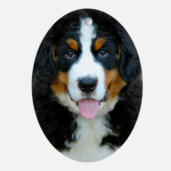 Bernese Mountain Dog Puppy 3 Oval Ornament
