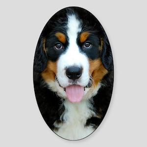 Bernese Mountain Dog Puppy 3 Sticker (Oval)