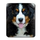 Bernese mountain dog Classic Mousepad