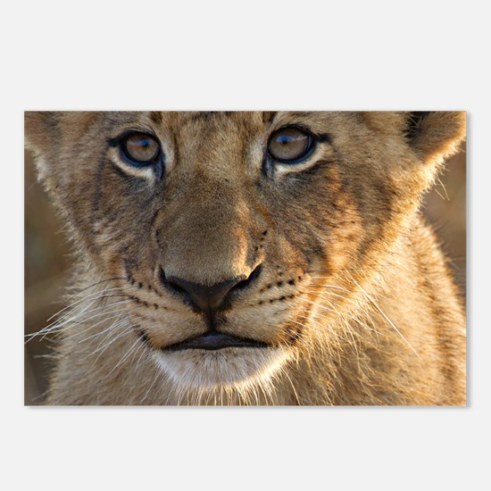 Sparta Lion Cub Postcards (Package of 8)