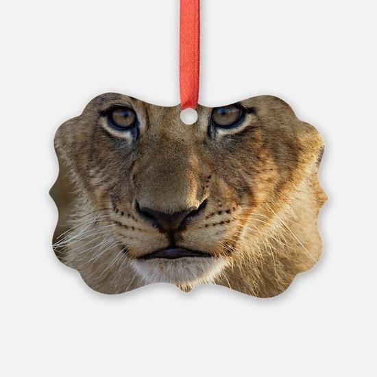 Sparta Lion Cub Ornament