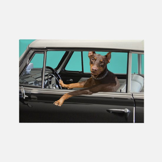 Doberman Pinscher in Classic Car Rectangle Magnet