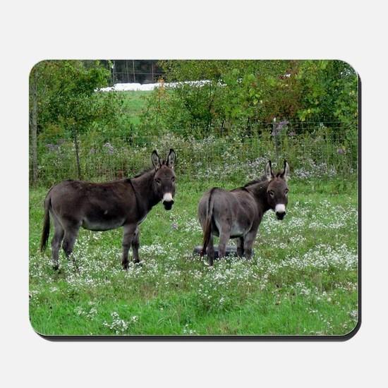 Two Miniature Donkeys Mousepad
