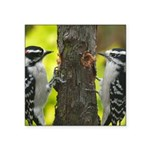 Woodpecker Pair Square Sticker 3