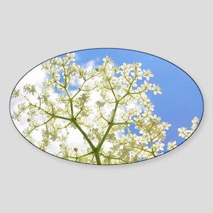 Elderflower Sky Sticker (Oval)