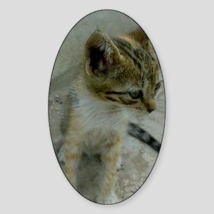 cute kitty Sticker (Oval)