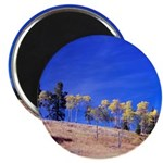 Aspens on Hill Magnet
