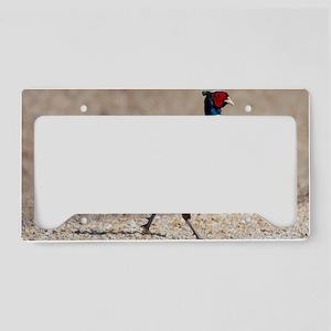 Ringnecked Pheasent License Plate Holder