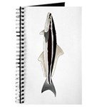 Cobia Journal