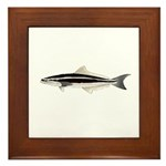 Cobia Framed Tile